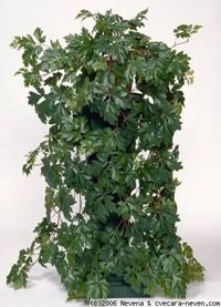 семена тыквы для похудения