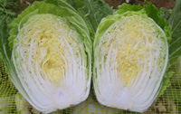 Beijing cabbage chinensis (Капуста пекинская, Китай)