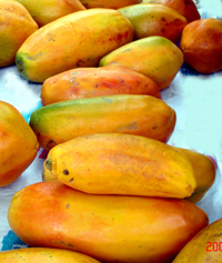 Папайя бразильская, сорт Калимоса Carica papaya Brazilian Calimosa