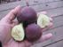 Ficus carica Beall Fig Инжир, Фига, Фиговое дерево, Смоковница, сорт Beall Fig