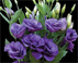 Lisianthus ABC Blue Лизиантус, Эустома АБС голубая