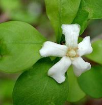 нитроаммофоска удобрение применение для комнатных растений