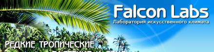 Info falconlabs ru новости энциклопедия